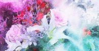 Lenguaje de las flores: ¡origen, historia, declaración, significado!