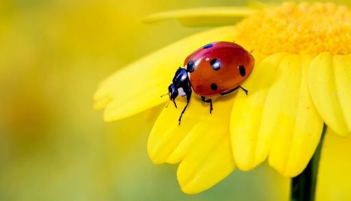 flores de color amarilla y sus significados